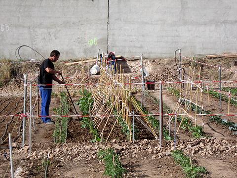 62 huertos urbanos se preparan para la cosecha de verano