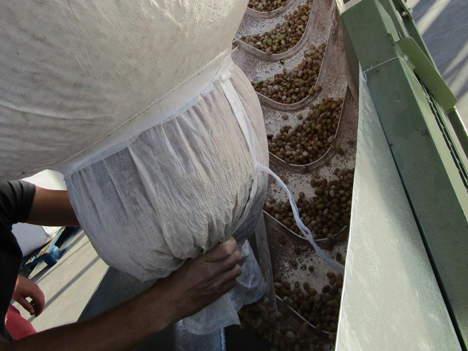 El alcalde conoce el proceso de producción del pistacho