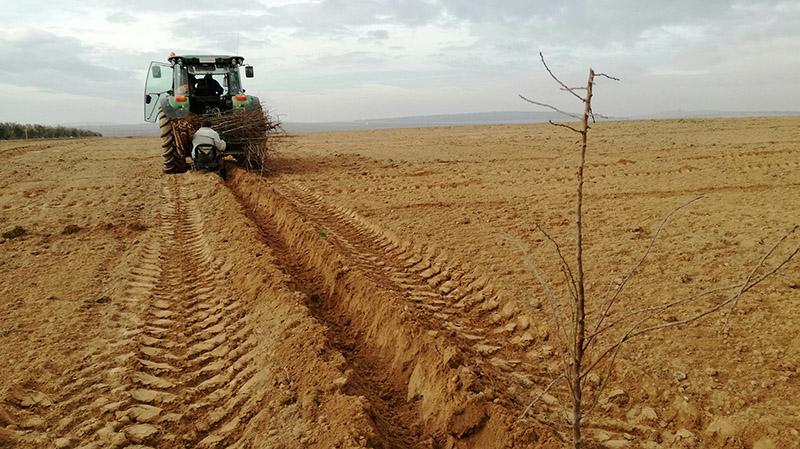 Empieza la campaña de plantaciones de árboles productivos y biodiversidad