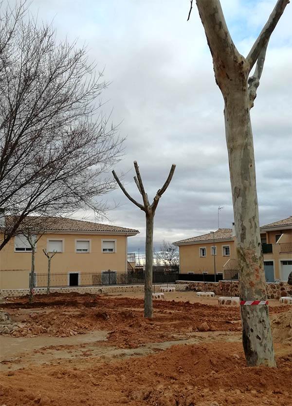 Retirada de varios árboles de la plaza, transplantados en el parque Chacón