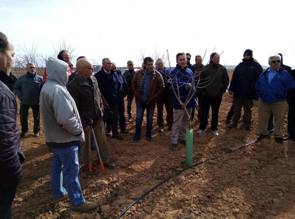 Agricultores villacañeros se forman en la poda del almendro