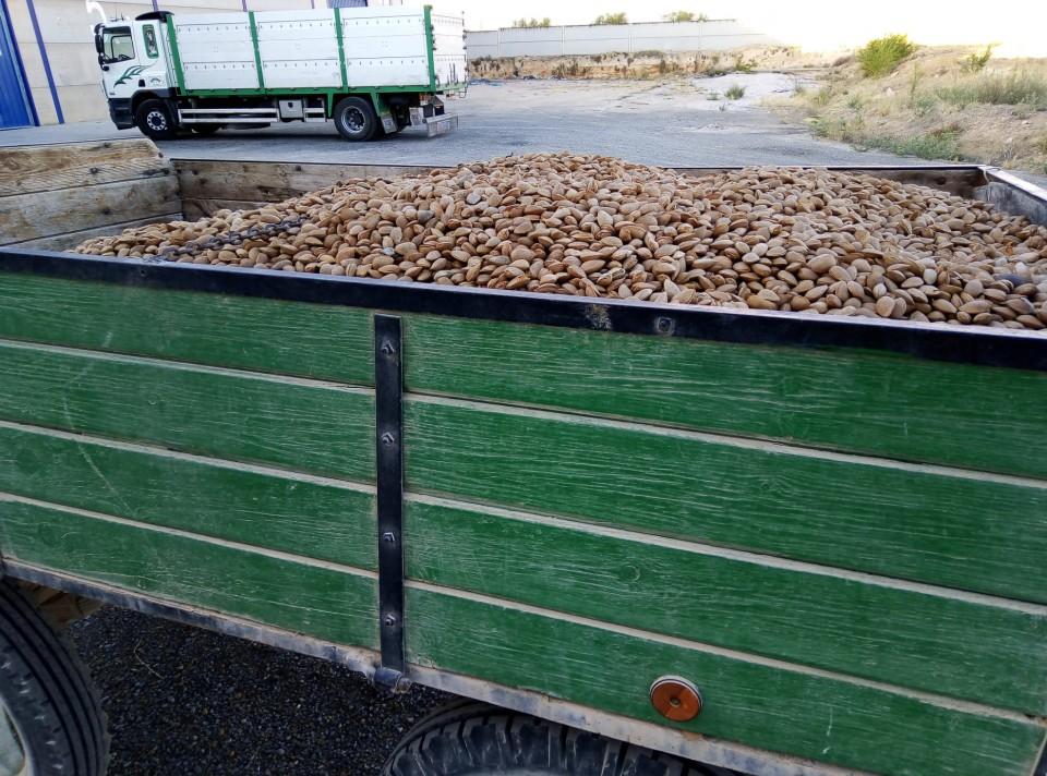Instalaciones del Vivero de Empresas servirán esta campaña para recepcionar la producción de almendra en la localidad